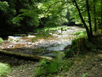 Located In Lycoming County And Just Minutes From The Village Of Slate Run PA,  The Black Forest Trail Traces The Shoreline Of Pine Creek, The River  Credited ...